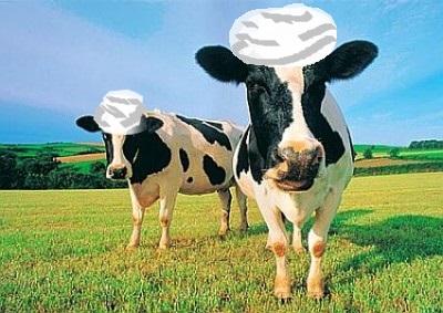 cow - Kopie